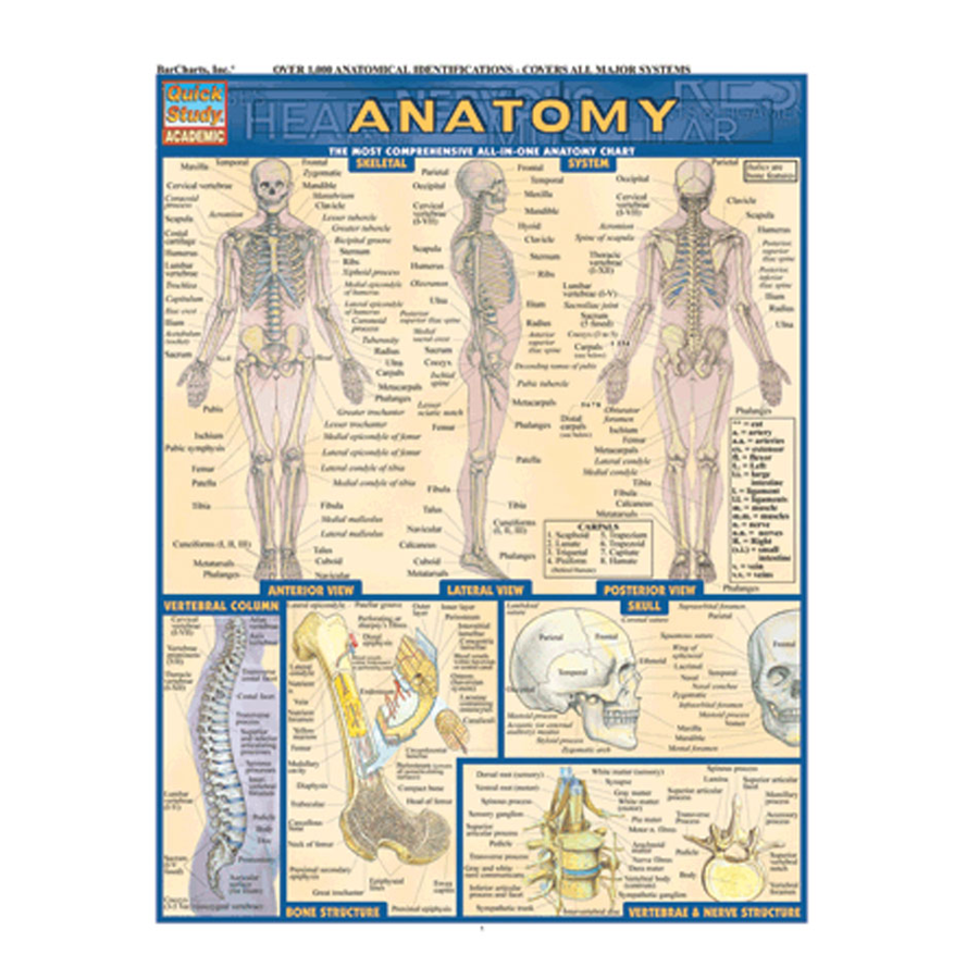 Image For Bar Chart, Anatomy