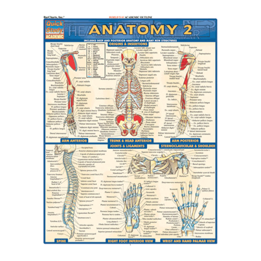 Image For Bar Chart, Anatomy 2